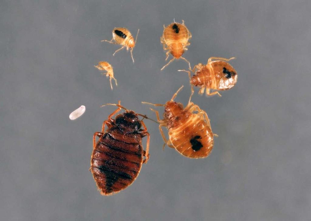 семенова очистись от паразитов читать онлайн