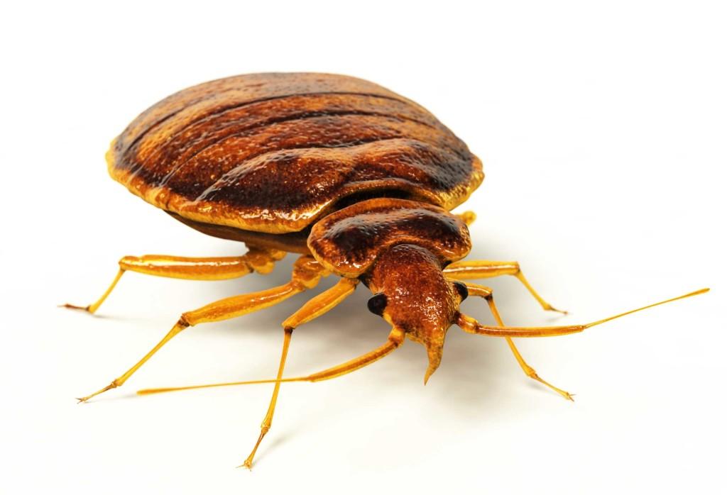 средства уничтожения паразитов организме человека
