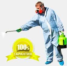 Как выбрать лучшую фирму по уничтожению насекомых