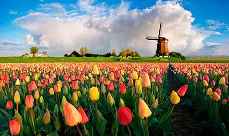 Тетрикс производится в Нидерландах