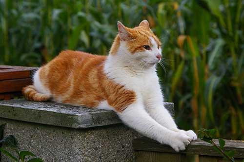 влияние на кошек